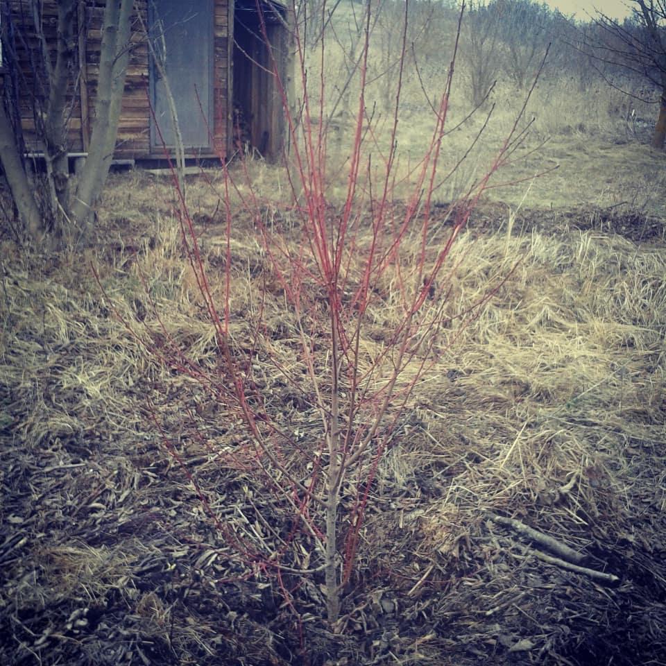 На изображении может находиться: растение, дерево, трава, на улице и природа